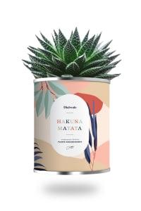 HAKUNA MATATA - Cactus ou plante pot grand modèle Hakuna Matata